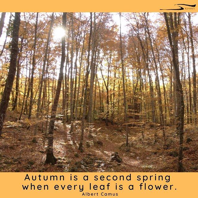 From Our Instagram Feed: Siempre hemos querido venir aquí en el otoño…