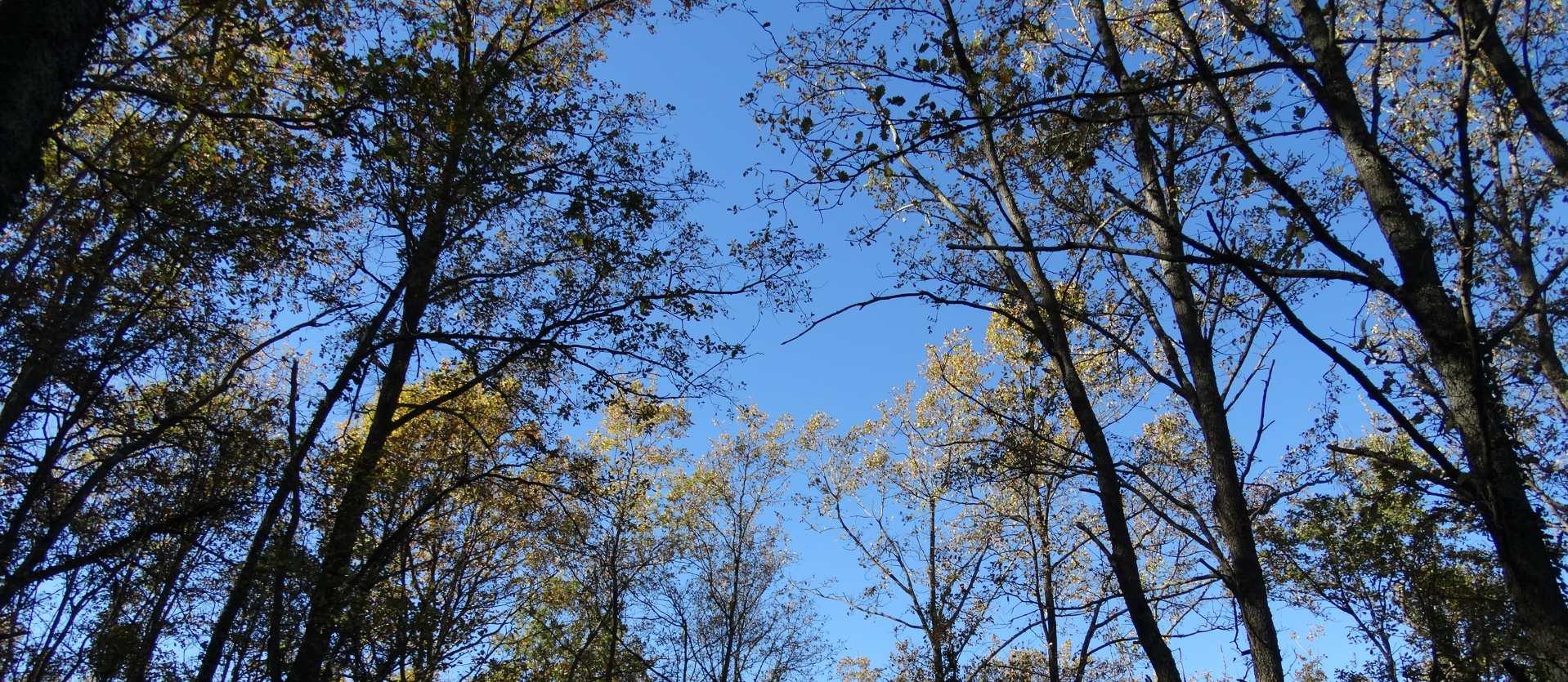 slide_trees